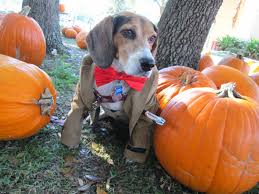 Radio Collar For Beagle Life With Beagle October 2013