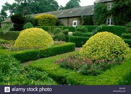 round clipped shrubs in a formal garden bed with surrounded with