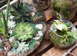 how to make your own terrarium with experts from brooklyn u0027s