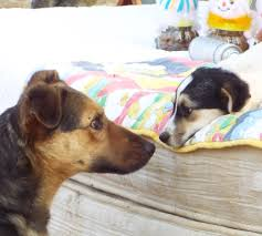 Romanian Love Quotes by Hope For Romanian Strays U2013 Save A Life U2013 Adopt A Stray