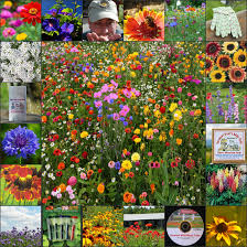 wildflower seed packets wildflower seeds flower bulbs perennials vermont wildflower farm