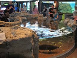 Georgia Aquarium Floor Plan by Shedd Aquarium Touch A Sturgeon Touch Tanks Pinterest