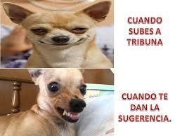 Memes De Chihuahua - memes de 4to y 5to paso facebook