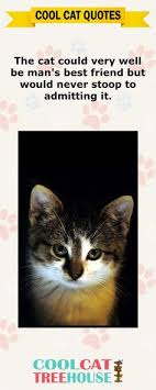 Awesome Quotes About Cats Being - such a great feeling to be trusted animal adoption rescue