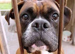 belgian shepherd kijiji petition kijiji canada stop puppy mills and prohibit the sale