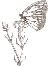 butterfly and flower drawing easy