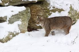 Kentucky wildlife tours images Kentucky afield outdoors fresh blanket of snow opens window to jpg