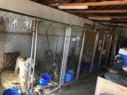 afghan hound rescue az 30 dogs taken from phelan home operating illegal marijuana grow