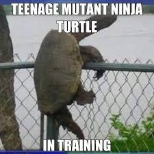 Turtle Memes - teenage mutant ninja turtle in training meme image quirkybyte