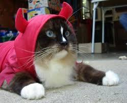 Funny Halloween Costumes Cats Terrorist Kitty Costume Idea Halloween Kitty Costume