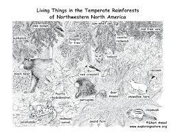 desert owl coloring page habitats art exhibition desert coloring pages at coloring desert