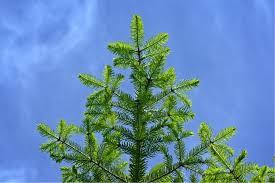 flora sky apk free free images tree sky leaf flower evergreen botany