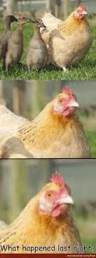 Hen Meme - hen leading ducklings by free meme center