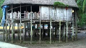 homes on pilings house on stilts in the nicobar islands archipelago youtube