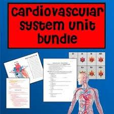 Heart Anatomy Youtube Cardiovascular System Anatomy Youtube Send To Students