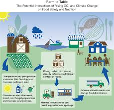 from farm to table farm to table the potential interactions of rising co2 and climate