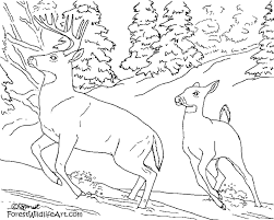 deer coloring page wild animal doe and fawn coloring pages and