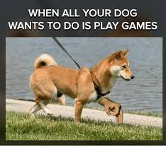 Play All The Games Meme - when all your dog wants to do is play games meme on me me