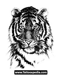 tiger meaning 13