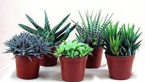 small low light plants small indoor house plants small indoor plants to decorate house best