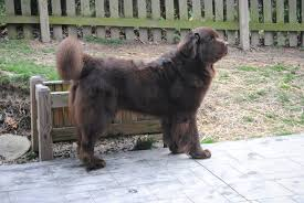 dog barks when we leave can i get a woof woof or not please mybrownnewfies com