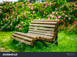 bench photo wooden bench in a beautiful park garden beautiful