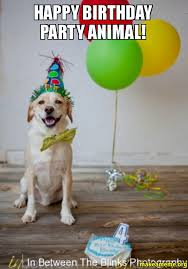 Birthday Animal Meme - happy birthday party animal make a meme
