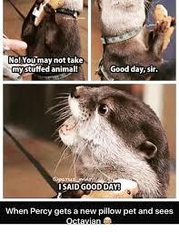 Good Day Sir Meme - no you may not take mystuffed animal good day sir oparus i said