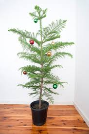 photo of tree with simple decorations free