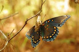 the birth of a butterfly the quitter