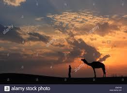 thar desert silhouetted person with a camel at sunset thar desert near stock