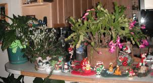 keep flowering gifts alive habitat horticulture pnw
