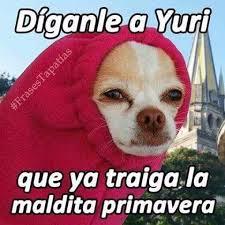 Memes De Chihuahua - chihuahua 眇por qu礬 eres as祗 memes se quejan del clima extremo