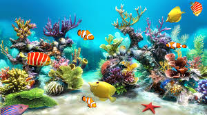 sim aquarium live wallpaper android apps on google play