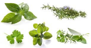 les herbes de cuisine herbes aromatiques de grandes qualités nutritionnelles