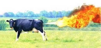 vaca y metano