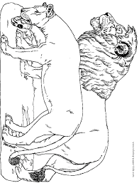 coloring pages of tigers detroit coloring pages