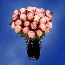 white roses for sale wholesale white roses with tips for sale global