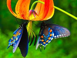 169 best beautiful butterflies images on pinterest beautiful