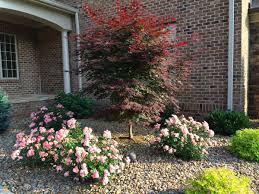 drift roses sweet drift plants encyclopedia