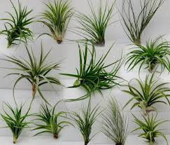how to make an air plant terrarium zing blog by quicken loans