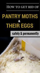 best 25 pantry moths ideas on pinterest books like the martian