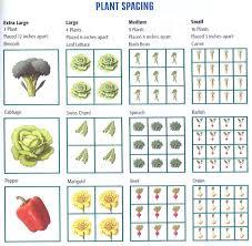 winter garden planning for spring and summer vegetable gardens dsc