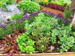 ewa in the garden cute vegetable garden ideas