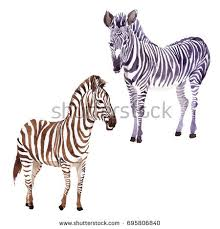 zebra tattoo stock images royalty free images u0026 vectors