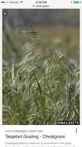 native plants of kansas 33 best kansas native plants images on pinterest native plants