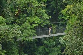 Under Canopy Rainforest by Rainforest U0026 Waterfall Tour Package Arenal 2 In 1