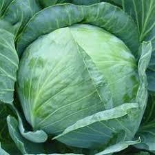 jericho organic lettuce a green thumb pinterest organic