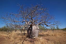 the tree scientific scribbles