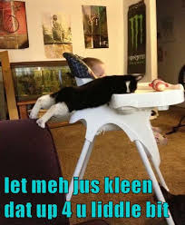 Clean Funny Memes - lolcats clean lol at funny cat memes funny cat pictures with